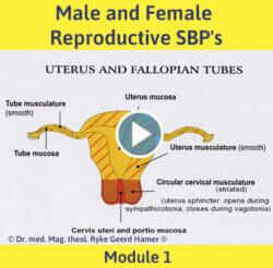 Module 1 - Male and Female Reproductive SBP's