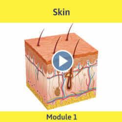 Module 1 - Skin